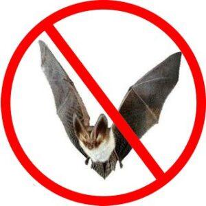 Control de Murcielagos