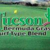 Césped Bermuda Grass Blend Tucson Blend