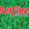 Cesped Profesional Festuca Alta Belfine Semillera Guasch