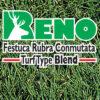 Césped Festuca Rubra Conmutata Blend Reno Blend
