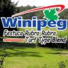 Césped Festuca Rubra Rubra Blend Winipeg Blend Guasch