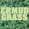 Césped Bermuda Grass Guasch 500 Gr