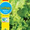 Lechuga Waldmanns Green