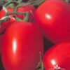 Tomate Río Pampa