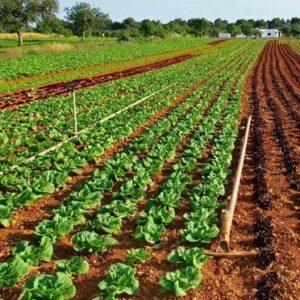 Control de Cultivos